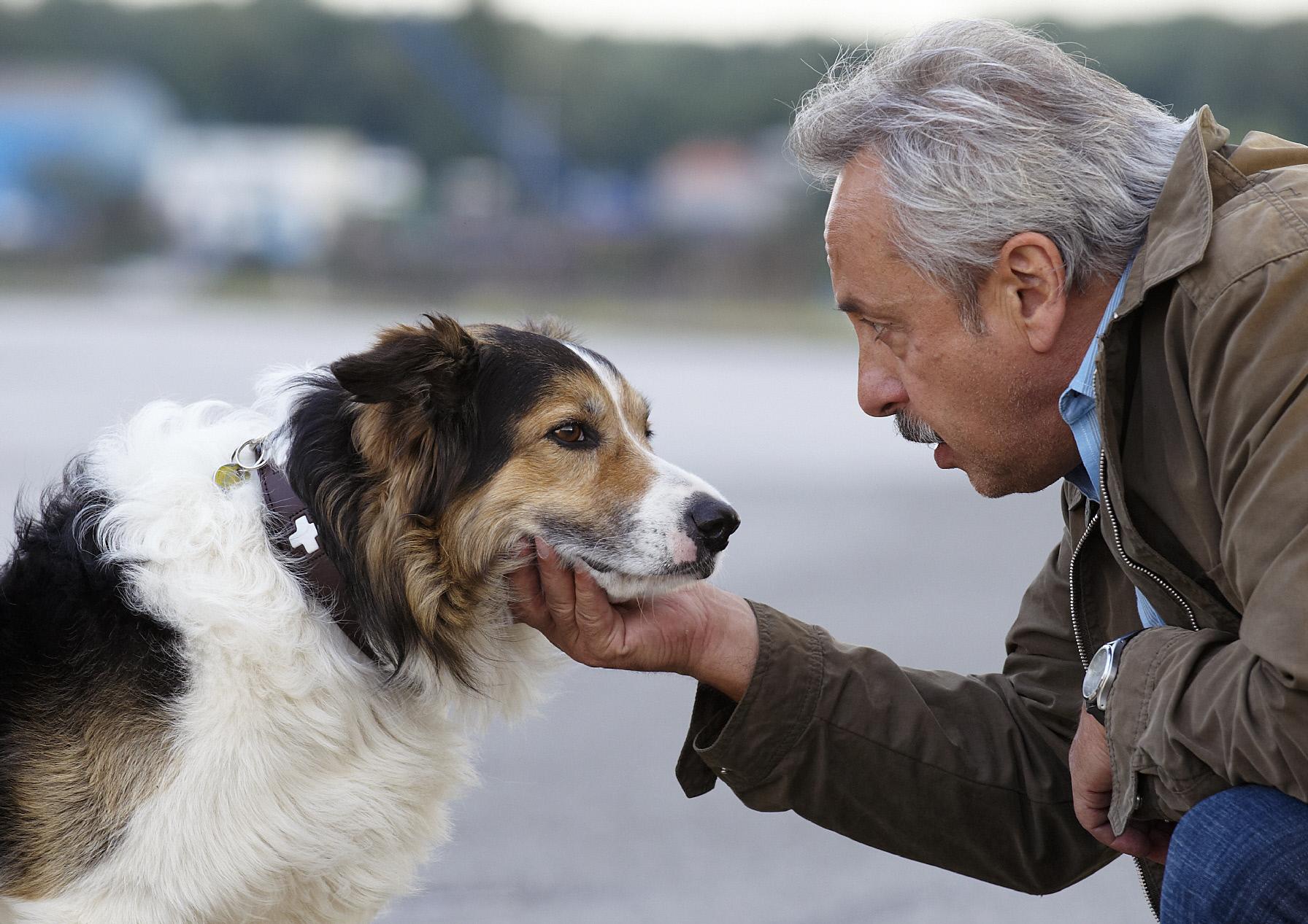 Stubbe (Wolfgang Stumph) und sein neuer Freund Desperado (Hund Joey), der Hund des Mordopfers und der einzige Zeuge.  Honorar