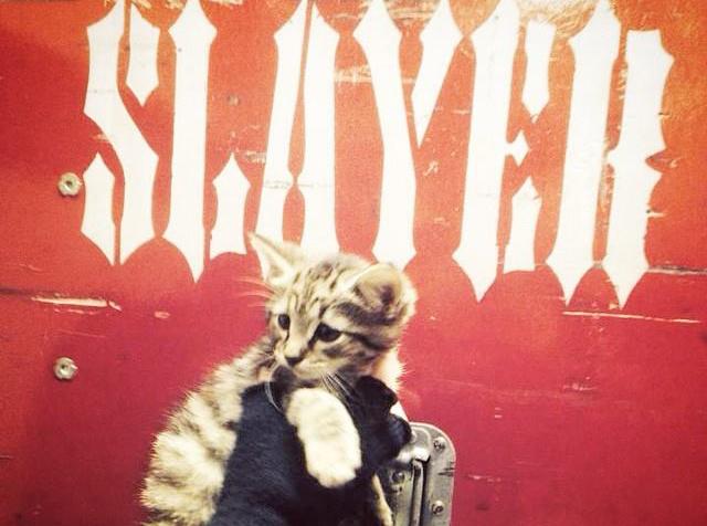 Slayer retten Kätzchen Gypsy