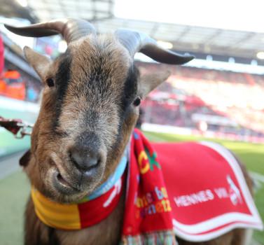 1. FC Köln Hennes
