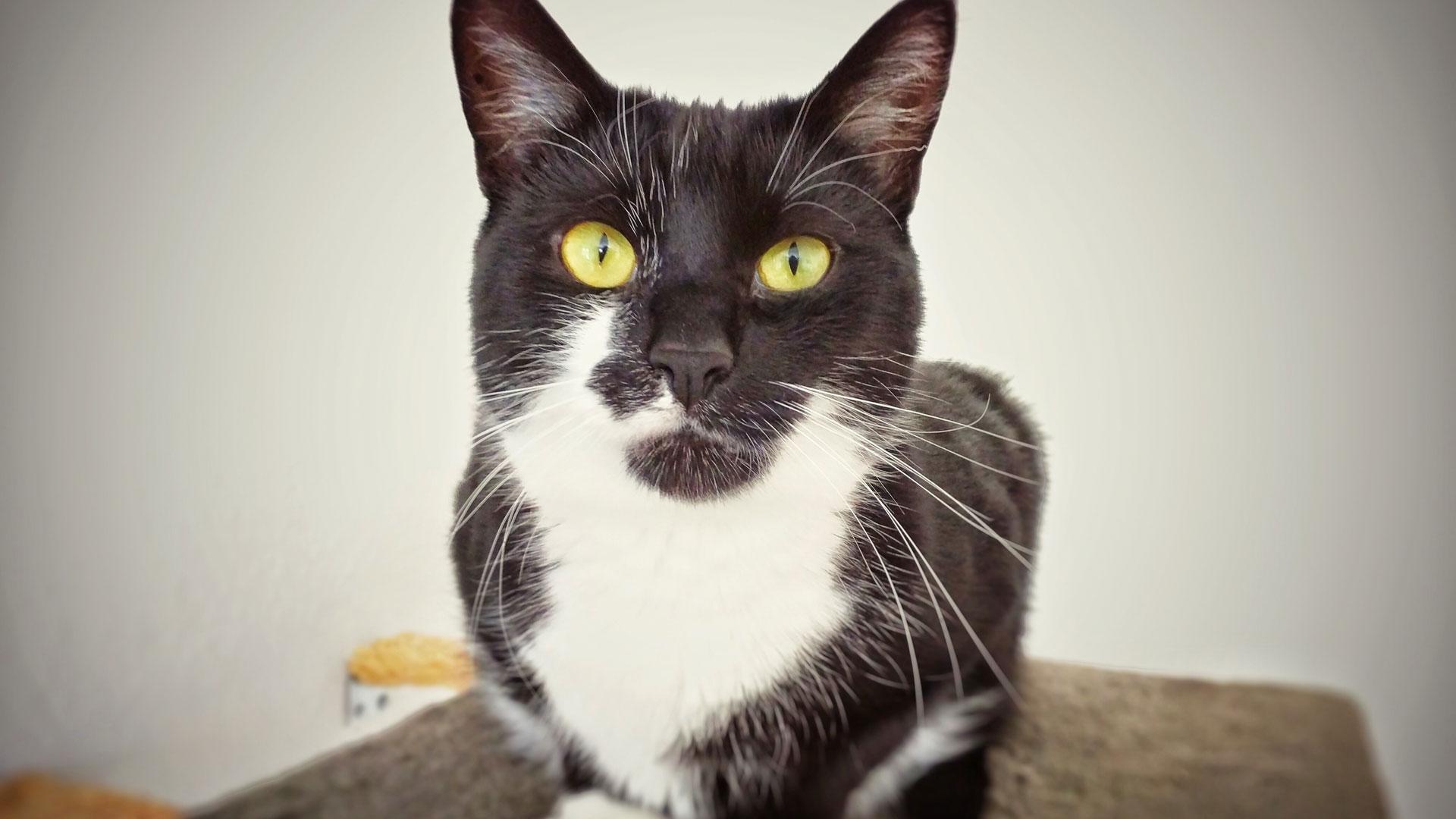 """Endlich verstehen, was die Katze sagt: """"Kittify"""" macht es (fast) möglich."""
