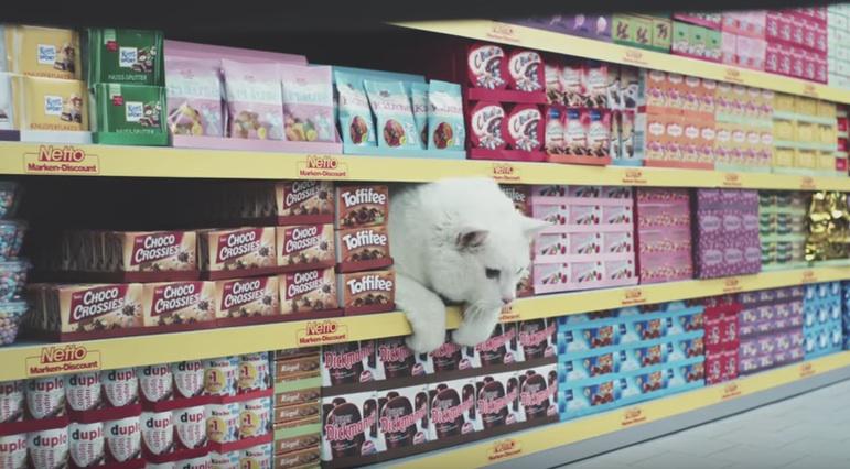Wie putzig, ein Kätzchen im Verkaufsregal!