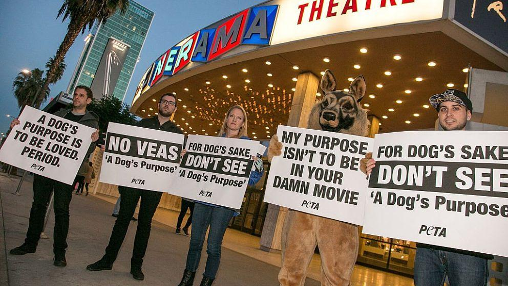 HOLLYWOOD, CA - JANUARY 27:  A general view of atmosphere at PETA Protests 'A Dog's Purpose' On Opening Night at ArcLight Cin