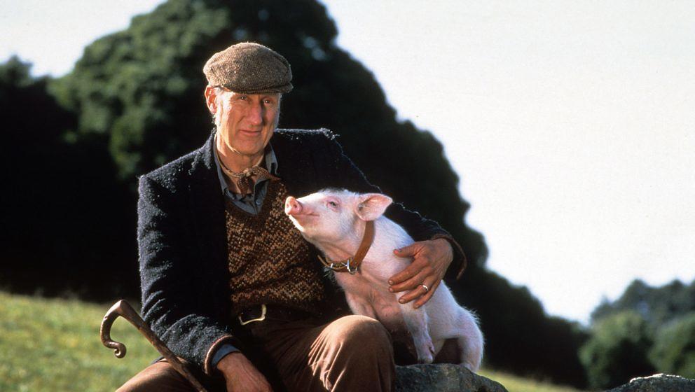 """James Cromwell als Farmer Arthur Hogget in """"Ein Schweinchen namens Babe"""""""