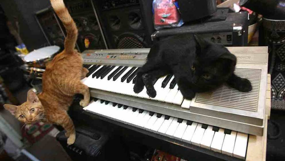 Two of the ten orphaned pet cats, sit on an electronic organ in the music shop and home of Lateef Jassim, in the Karada distr