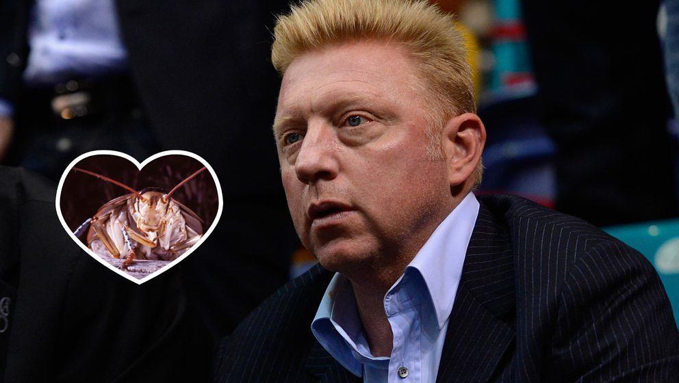 Boris Becker will in den Dschungel - allerdings nicht für lau