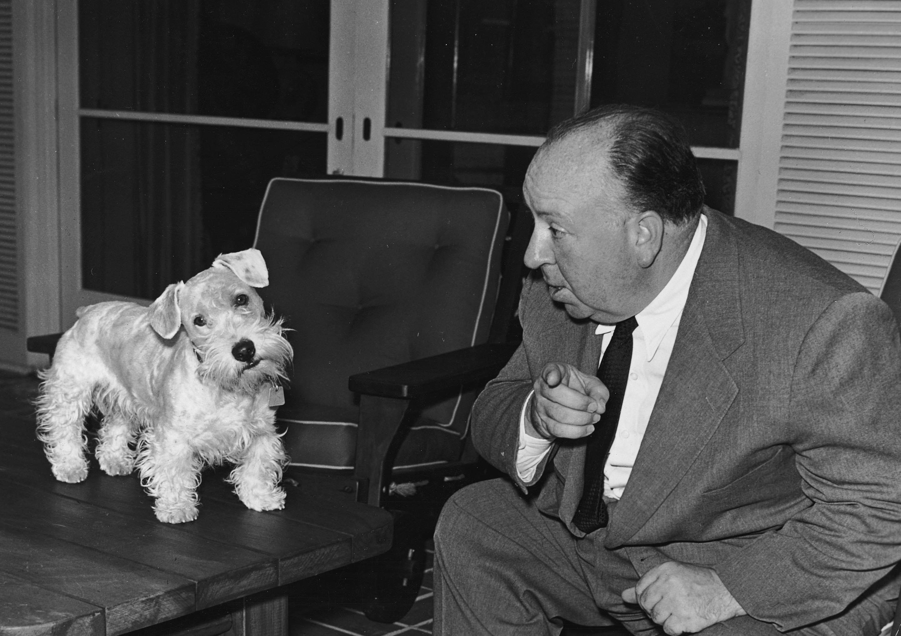Hitchcock mit Terriern