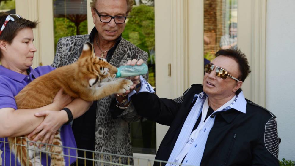 Roy Horn bei der Fütterung eines Tigers – sein Freund und Kollege Siegfried schaut amüsiert zu